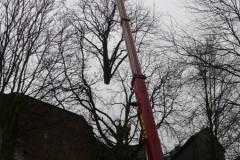 Kranunterstützte Baumfällung