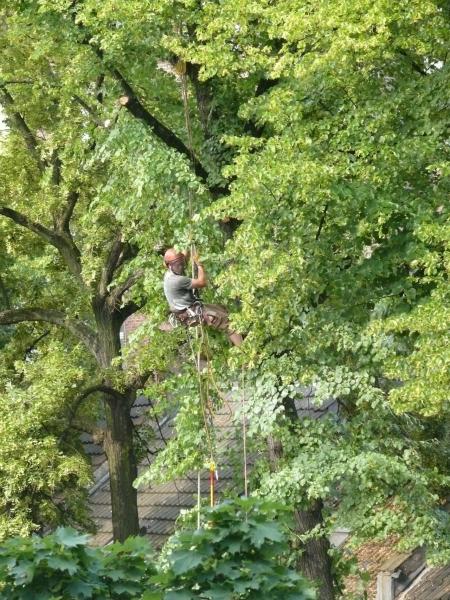 Baumpflege SKT Köln