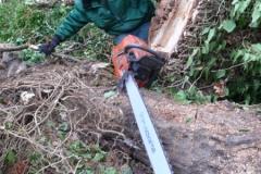 2014-01-15 14.49.26Baumfällung mit 25t Seilwinde mit Forstunternehmen Volker Schinde