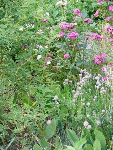 Naturnahe gartengestaltung landen gartenbau baumpflege for Naturnahe gartengestaltung